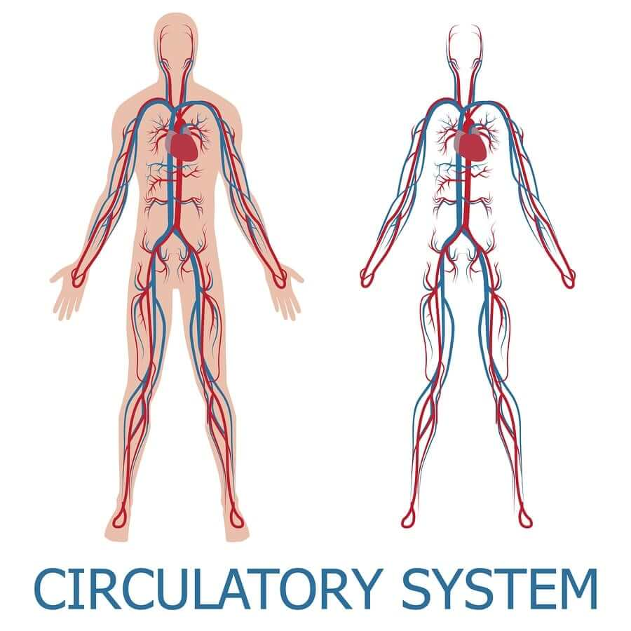 10 Essential Oils for Blood Circulation (Increase Blood Flow)