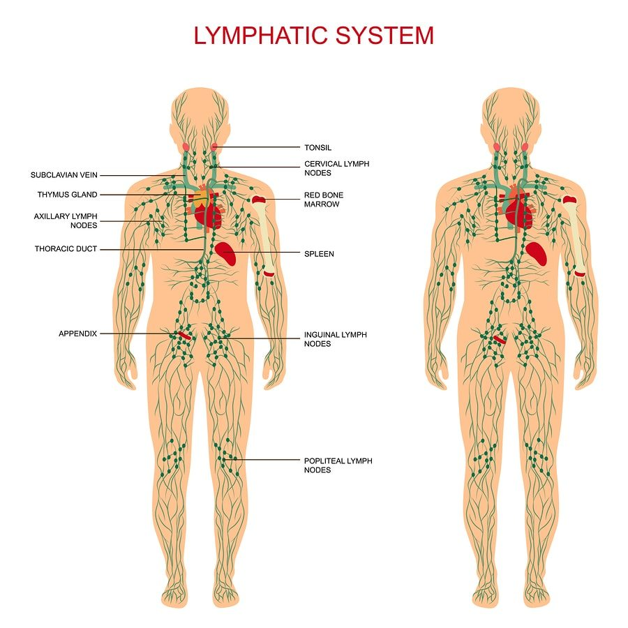 13 Essential Oils for Lymph Nodes (Lymphatic Drainage Support)