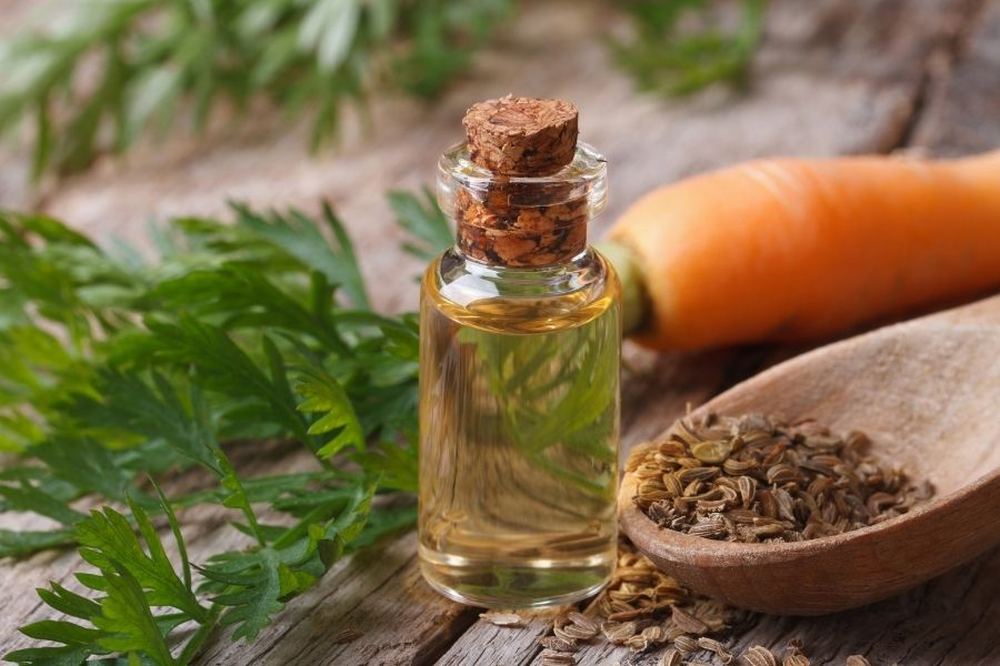 Carrote seed essential oil